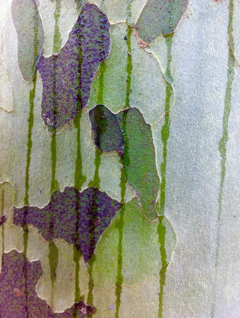 Organic forms overlaid with geometric shapes and lines – rain drips running down the patchy bark of a plane tree