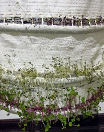 Penny Wheeler's 'Living Shift Dress' needing to be harvested.